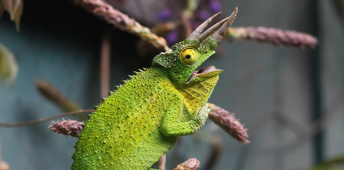 Cameleon, an adaptive animal